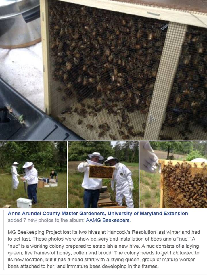 New Bee colonies
